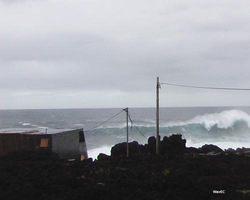 Pico Wave Plant 05 copy